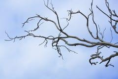 Rami di albero nudi Fotografia Stock Libera da Diritti