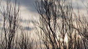 Rami di albero nudi al sole di alba Immagini Stock