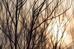 Rami di albero nudi al sole di alba Fotografia Stock Libera da Diritti
