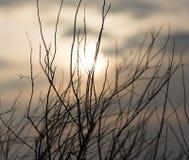 Rami di albero nudi al sole di alba Fotografia Stock