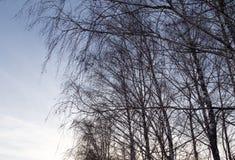 Rami di albero nudi al sole di alba Fotografie Stock