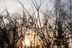 Rami di albero nudi al sole di alba Immagine Stock Libera da Diritti