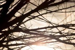 Rami di albero nudi al sole di alba Fotografie Stock Libere da Diritti