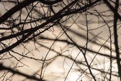Rami di albero nudi al sole di alba Immagini Stock Libere da Diritti