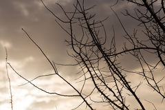 Rami di albero nudi al sole di alba Immagine Stock