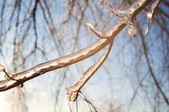Rami di albero nudi con ghiaccio Fotografie Stock