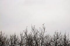 Rami di albero nudi di inverno Fotografia Stock