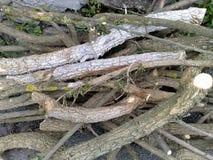Rami di albero ramificati fotografia stock libera da diritti