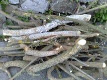 Rami di albero ramificati fotografie stock libere da diritti