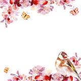 Rami di albero di sakura di rosa della mano dell'acquerello con l'uccello su fondo bianco Struttura botanica floreale della prima illustrazione vettoriale