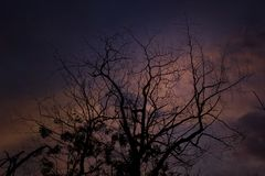 Rami di albero secchi al crepuscolo immagine stock libera da diritti