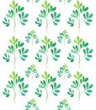 Rami di albero senza cuciture del modello dell'acquerello Fotografia Stock Libera da Diritti