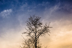 Rami di albero soli Immagine Stock