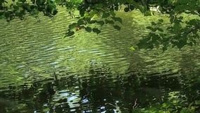 Rami di albero sopra il lago video d archivio