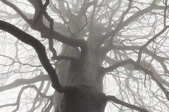 Rami di albero spettrali Immagine Stock