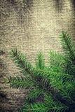 Rami di albero verdi dell'abete sul fondo di insaccamento immagine stock libera da diritti