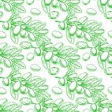 Rami di albero verdi senza cuciture dell'argania spinosa royalty illustrazione gratis