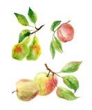 Rami di Apple, della pera e della pesca con le foglie e frutti in acquerello royalty illustrazione gratis