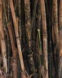Rami di bambù Fotografia Stock