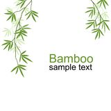 Rami di bambù verdi Fotografie Stock