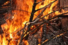 Rami di Conflagrant degli alberi Immagine Stock
