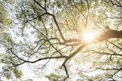 Rami di grande albero Fotografia Stock Libera da Diritti