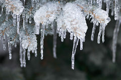 Rami di inverno in ghiaccio Fotografia Stock