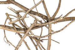 Rami di legno asciutti Fotografie Stock Libere da Diritti