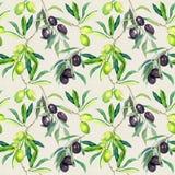 Rami di olive di di olivo Reticolo senza giunte watercolor illustrazione di stock