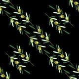 Rami di di olivo Reticolo senza giunte Frutta dell'oliva verde, foglie Immagine Stock
