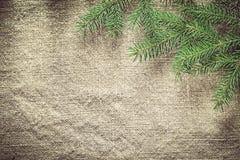 Rami di pino verdi sul fondo di insaccamento fotografia stock