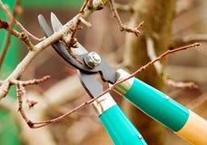Rami di taglio dall'albero con le forbici Immagini Stock