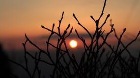 Rami di tramonto - dettaglio fotografia stock libera da diritti