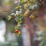 rami di un albero contro cielo blu Fotografia Stock