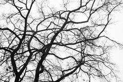 Rami di un albero di inverno Fotografia Stock
