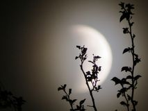 Rami di un'eclissi lunare 2 immagini stock libere da diritti