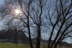 rami e bacche di alberi su loro all'autunno novembre Fotografia Stock Libera da Diritti