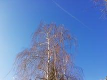 Rami e cielo blu di albero della betulla fotografie stock libere da diritti