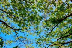 Rami e cielo blu Fotografie Stock Libere da Diritti