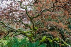 Rami e felci di albero complessi Fotografie Stock Libere da Diritti