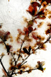 Rami e filo di rame congelati Fotografia Stock