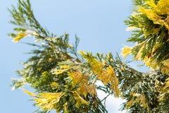 Rami e foglie Immagini Stock Libere da Diritti