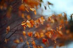Rami e foglie Fotografia Stock
