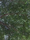 Rami e foglie Fotografia Stock Libera da Diritti