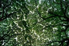 Rami e foglie contro il cielo Immagine Stock