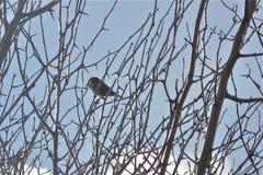 Rami e un uccello fotografie stock