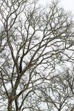 Rami ed erba di albero astratti congelati Immagini Stock