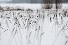 Rami ed erba di albero astratti congelati Fotografia Stock