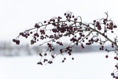 Rami ed erba di albero astratti congelati Fotografie Stock