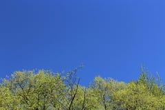 Rami freschi degli alberi Sorgente Fotografia Stock